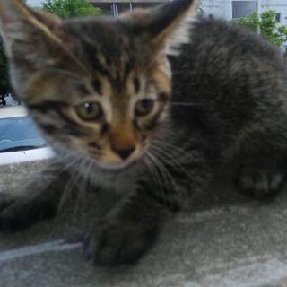 福岡市西区で猫の里親募集