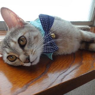 アビシニアン風迷い猫さん☆猫親さん決定致しました☆
