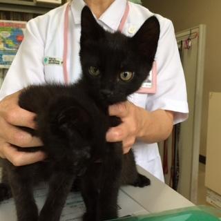 黒猫3兄妹