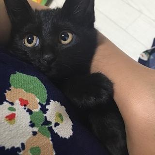 黒猫ちぇるちぇる