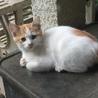 飼い主のいない生後3ヶ月のネコちゃんです!
