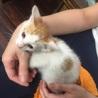 都内大田区2ヶ月の子猫5匹