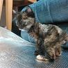 生後一か月 サビ猫