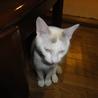 化け猫のように写ってしまったユキちゃん・・・怖いです。(~_~;)