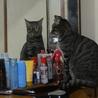 鏡で自分の顔をチェックするのが日課。僕って猫だったの(゚д゚)!