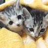 ジャングル?で保護した子猫5匹でーす。