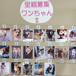 わんにゃん小梅保育園☆住協 川越支店で夕涼み犬猫譲渡会 サムネイル3