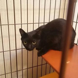 黒猫メス☆マーマ