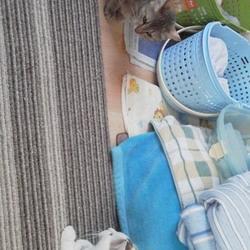 迷い猫のアビちゃん無事退院☆
