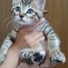 元気いっぱい遊び好きキジ子猫甘栗! サムネイル3