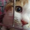 人も猫も大好き三毛子猫ミケコ! サムネイル3