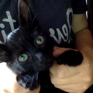 犬みたいな性格の黒猫「黒豆」君