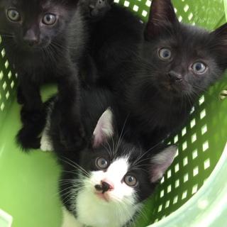 黒子猫2匹ありがとうです!あと1匹♂別募集します。