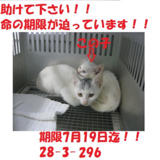 お迎え有り難うございました!感謝☆子猫2