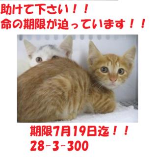 お迎え有り難うございます!!子猫4