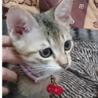 3ヶ月オス猫のレオ君です(*^^*)