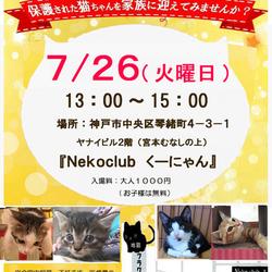 7月26日(火) 13時~15時【第12回 猫の譲渡会 in 三宮・くーにゃん】