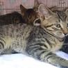 いつも好奇心でいっぱいキジ子猫カンガルーちゃん! サムネイル5