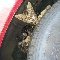前橋市 捨て猫が送迎バスに乗ってしまった(T_T)