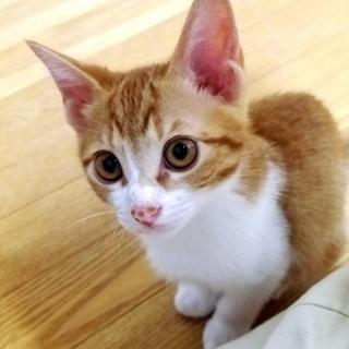 子猫の茶シロ
