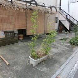 第3回 戸田ニャンコおたすけ隊 里親会開催
