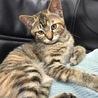 柄の可愛いメス猫