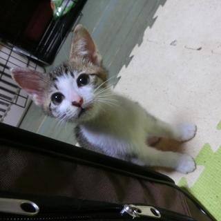 【端午】TNRのため保護した猫さんが生みました