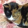 猫のガラガラ声について