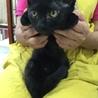 黒ちゃん子猫ヒビキ★男の子★手術済 3か月半 サムネイル2