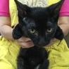 黒ちゃん子猫ヒビキ★男の子★手術済 3か月半 サムネイル4