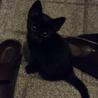 里親募集、可愛い子猫達です‼︎