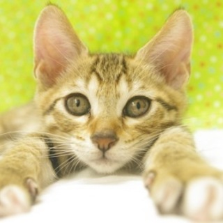 子猫多数保護しています