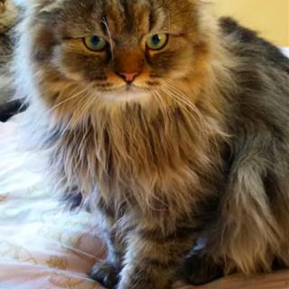毛がふわふわで、すごく人懐っこい猫ちゃん♪