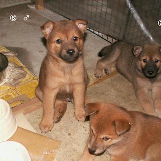 愛知にいるかわいい子犬たちみにきてね。