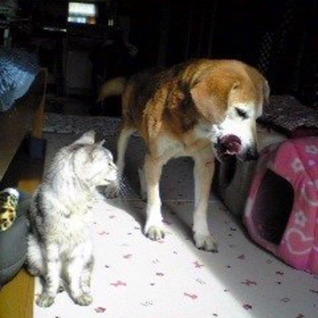 わせだつるまき猫の家のカバー写真