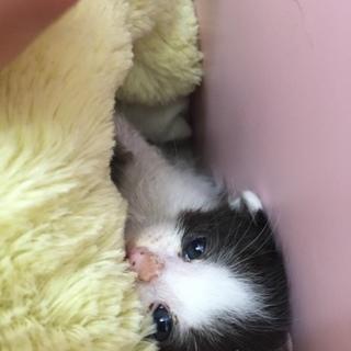 まだ幼猫です