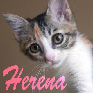 縞三毛女子♡2ヶ月くっきりアイライン美少女ヘレナ