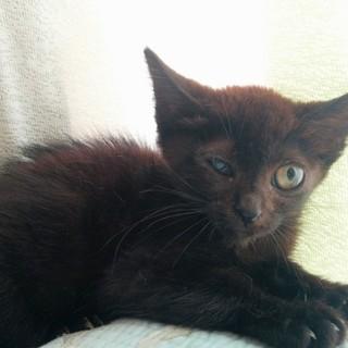 黒猫ちゃん メス
