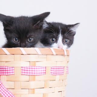 人馴れバツグン!姉妹猫 りんとあかね