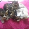 生後1ヵ月半過ぎの子猫6匹の里親を募集!