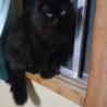 かわいい黒猫です!