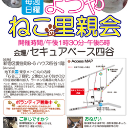 7月30日(土)~31日(日)愛&愛猫の里親会in四谷(ボランティアも募集中)