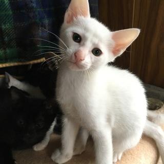 黒猫と白猫とトラ猫