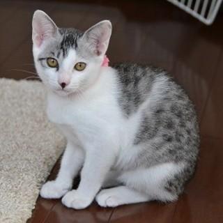 美猫のハニーちゃん・・・3ヶ月です。