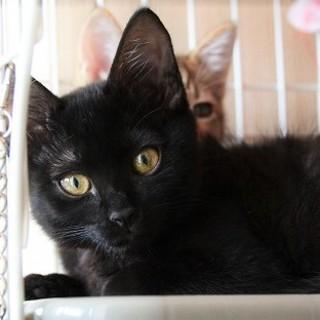 美猫になります、クロミちゃん・・・3ヶ月