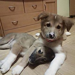 人も犬も大好き社会性のあるタラくん飼いやすい子です