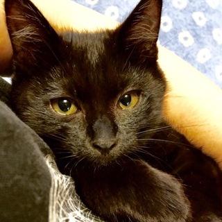 まん丸お目めの黒猫クーちゃん・・・3ヶ月半