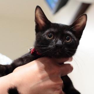 黒猫チルチルちゃん♪