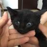 黒猫☆女の子