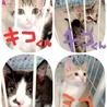 グラビュー、今年も子猫祭り開催してます!
